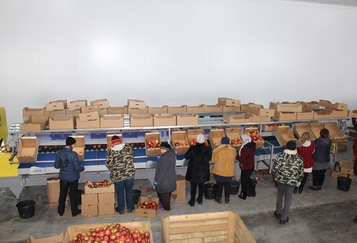 Grading - Sorting and Processing Line for Apples