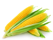 "<a href=""/processing-sorting-grading-machines-for-corn."">Lines for sorting cutting standardizing for Corns</a>"