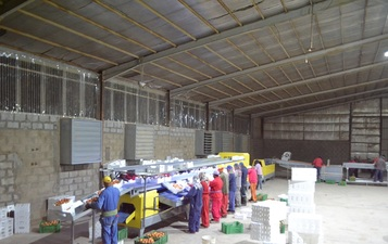 Processing,sorting,grading and packaging lines for Tomatoes