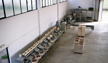 Sorting-Grading-Sizing-Packaging Line for Αpples