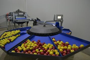 Sorting-Grading-Processing Line for Apples