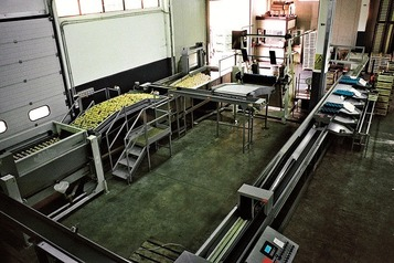 Processing-Sorting-Grading-Sizing and Packaging Line for Apples